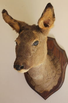 Mounted deer head on wall shield.