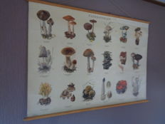 """Old school poster / school map on linen """"Mushrooms.""""   Images of 18 mushrooms found in The Netherlands, like the beautiful clavaria and the penny bun."""