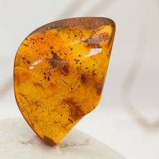 Baltic Amber Specimen with Four Fossil Insects - 28x18x8mm