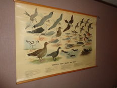 """Beautiful old school poster / school map on linen """"birds of dunes and coast.""""   Images of 29 birds that live in the dunes and by the coast."""