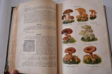 Lot with four books on cookery - 1900/around 1936
