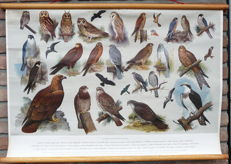 Old school poster with day birds of prey and owls