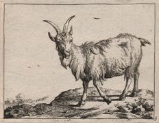 Paulus Potter (1625-1654) - A goat standing in a landscape - Etched by Marcus De Bye ( 1639-1688 ) -  ca 1665