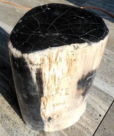 Side table made of petrified wood from trunk - 34 x 21 cm Weight 20.1 kg.