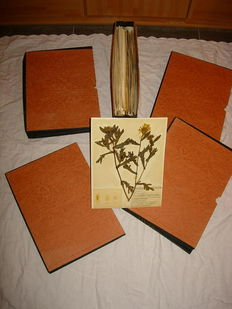 Herbarium; Herbarium with 5 cases with 135 plates of dried flowers and descriptive notes - 1955