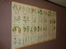 """Very nice old original school poster / school map on linen with the outline of the """"agricultural crops"""" with various grasses, clovers, grains and various other crops"""