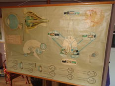 "Big old Anatomical school poster/school board of the ""eye and its functions"""