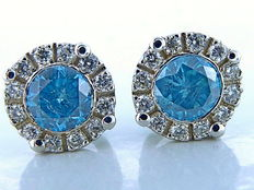 White gold ear studs in 18 kt with fancy blue diamonds of 1 ct, total diamond weight 0.25 ct *** No reserve price ***