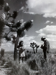 Onbekend/All Year Club of Southern California - Joshua Tree State Park - 1961