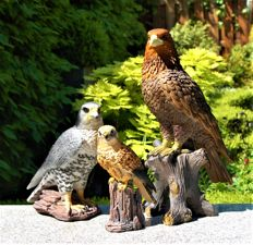 Three special birds of prey - Eagle and 2 falcons