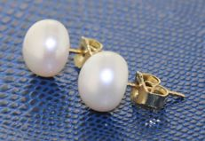 14 kt gold earrings with pearl - length: 0.8 x 0.8 cm