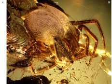Baltic Amber  spider inclusion