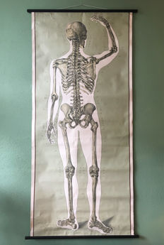 School poster of the back of skeleton