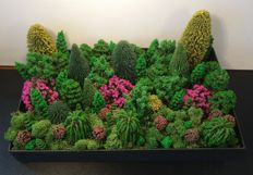 Noch/ and others H0 - Scenery trees 70 pieces and 50 grams of Iceland moss