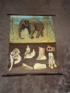 Lovely school poster by Jung-Koch-Quentell; The Indian Elephant