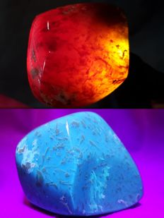 Polished natural Blue-red Indonesian Amber - 75 x 55 x 115gm - 130gm
