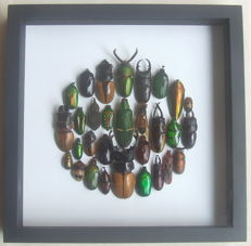 Fascinating Insect Display - Entomology as Art - 22 x 22cm