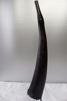 Large trumpet, blow horn, in antique ivory - MONGO - D.R Congo
