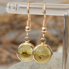 9 K Gold And Baltic Amber earrings with rare fossil insects