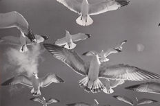 Carl Mydans (1907–2004) - Flying Gulls - 1978