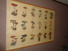 "Old school poster / school map on linen ""Mushrooms.""   Images of 18 mushrooms found in The Netherlands, like the Ramaria Formosa and the cep."
