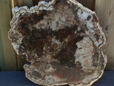 Petrified wood - 42 x 47 x 2 cm - 6550 grams