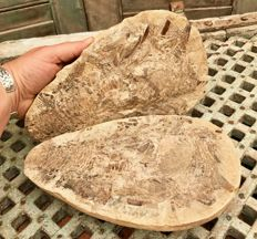 Fossil fish in matrix with counterpart - Aspidorhynchus - 26.5 x 16 x 10.5 cm - 5.13 kg