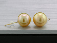 A pair of bright, gold cultured South Sea pearl ear posts, 11.1 mm in diameter, 750 yellow gold -- no reserve price --