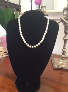 Necklace with 7-8 mm freshwater pearls – Length: 45 cm