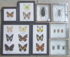 A varied collection of exotic Butterfly and Insect display cases - 12 to 25cm  (8)