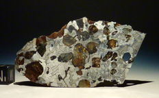 Meteorite Seymchan Pallasite thin  slice with great weight-surface-ratio