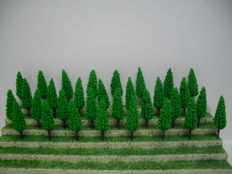 Scenery N  -   A lot with 170  trees
