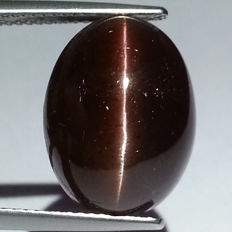Cat's Eye Scapolite - 16.48 ct