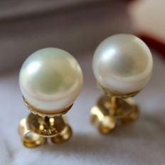 Gold quality vintage earrings 14kt/ 585 with genuine see / salty pearls and golden slots.