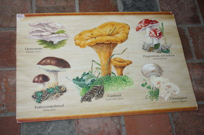 School map with mushrooms
