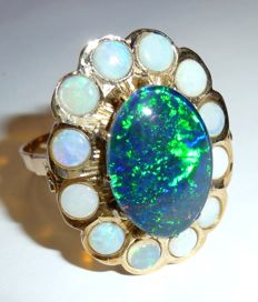 A generously big cocktail ring in 14 kt gold with big opal rosette - Australian opals, approx. 9 ct.