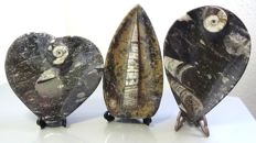 Decorative pieces, carved and polished with Ammonites and Orthoceras - 570 gr. (3).