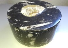 Decorative box, carved in fossil stone with ammonite and orthoceras - 1.520 kg