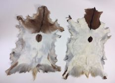 Fine pair of rustic, long-haired Goatskin rugs - white/golden beige/brown - 129 and 116cm  (2)