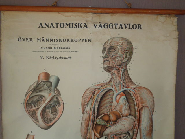 Two old original Anatomy school posters/school charts on canvas ...