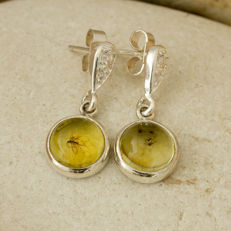 Lovely Silver, Cubic Zirconia And Baltic Amber Stud Earrings With Fossil Insects 22x9x4mm