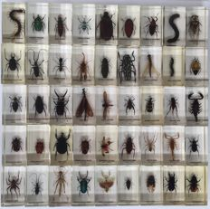 Varied collection of Exotic Insects in plastic carry-cases-34 x 28 cm (3)