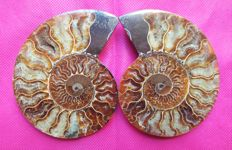 Iridescent Ammonite - Cleoniceras sp. -333 g - 110 mm - sawn in two