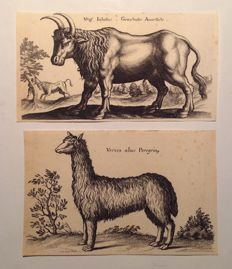 Engraver of the 16th century -  2 engravings taken from 'Historiae naturalis de quadrupedibus libri' - 1650