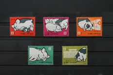China 1960 - Pigs, complete set 5 values - Michel 546/550