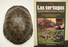 "Red-eared Slider carapace - Trachemys scripta elegans - together with Tortoise/Turtle Reference ""Last Tortugas"" - 20 x 15 x 7cm  (2)"