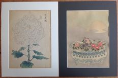Two coloured woodcut prints of chrysanthemums by Suzuki Harunobu (1725-1770) and Keika Hasegawa (active 1892-1905) - Japan - around 1900.
