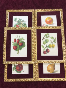 6 original chromolithographs depicting Fruit - ca. 1891