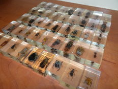 Collection of various Insects in resin blocks - 45 x 20 x 30mm  (45)