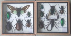 Interesting Exotic Insect display cases - 15 x 15cm  (2)